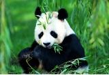 5 x licenta Panda Antivirus Pro 2011