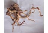 un decor copac pentru terarii