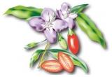 1 x 500 de grame de Fructe Goji
