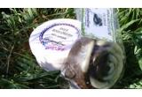 """3 x set de produse Lavandine (crema de corp """"Shea Body Cream"""" 150ml + sapun anticelulitic cu cafea SAU crema de fata """"Intensive Facial Care"""" 100ml + sapun cu trandafir SAU sapun """"Honey"""" cu miere, polen si propolis + sapun cu catina si suc de morcov + sapun """"Ice Mint"""" cu menta si castravete), cartea electronica Plante si ierburi medicinale"""