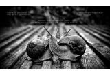 1 x o sedinta foto personala sau de cuplu de la Paul Boldut Photography + un album foto profesional pe hartie fotografica Kodak Endura cu 50 din pozele sesiunii foto