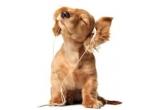 2 x premiu ce consta in servicii medicale pentru animalul tau de companie la Vet Medical Center din Bucuresti in valoare de 100 lei