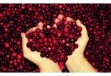 1 x cos cu produse delicioase cu merisoare + brosura oficiala cu retete American Cranberry - Merisor American pentru anul 2014