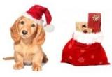 """un cadou, in valoare de 150 Lei, oferit Asociatiei pentru protectia animalelor """"Robi"""" (Bucuresti), 3 x calendare de birou si perete personalizate cu animalutul castigator"""
