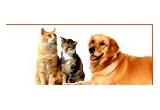 un pachet ce consta in suplimente nutritive pentru cainii activi, un pachet ce consta in produse de infrumusetare si igiena pentru animale, 2 kg de hrana ProFormance pentru pisici, 3 kg de hrana ProFormancea pentru caine